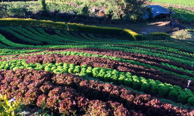 Maestría en Agricultura Ecológica